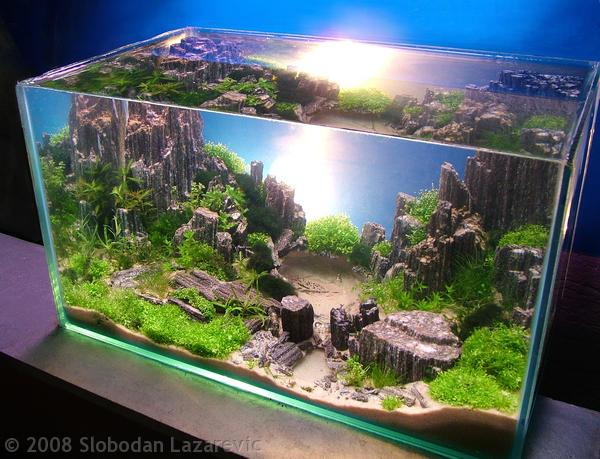 Aquascape Tedi Rustendi